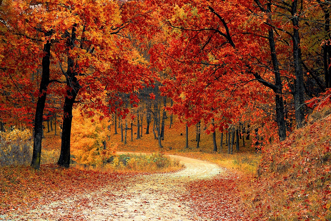 picture of fall