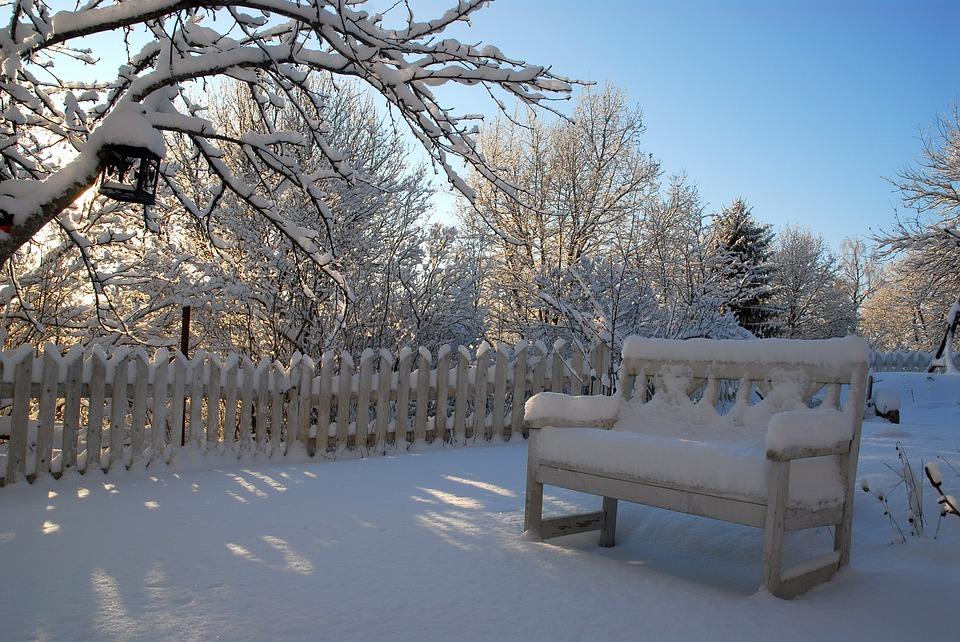 backyard in winter picture